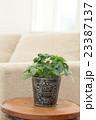 リビング 観葉植物 室内の写真 23387137