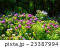 花 植物 長居植物園の写真 23387994
