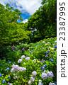 花 植物 長居植物園の写真 23387995