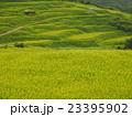 緑の棚田 23395902