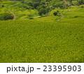 緑の棚田 23395903