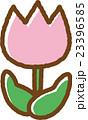チューリップ(ピンク) 23396585