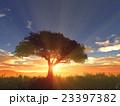 樹と日の出 23397382