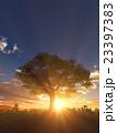 樹と日の出 23397383