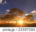 樹と日の出 23397384