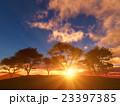 樹と日の出 23397385