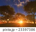 樹と日の出 23397386
