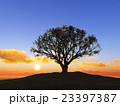 樹と日の出 23397387