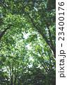 森林 23400176