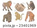 動物 オラウータン 猿 23401969