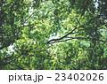 木々 23402026