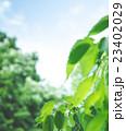 自然の風景 23402029