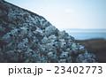 フジツボと海 23402773