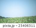 草原 23406311