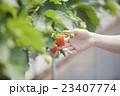 いちご農家の女性 23407774