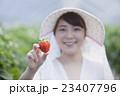 いちご農家の女性 23407796