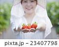 いちご農家の女性 23407798