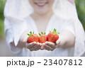 いちご農家の女性 23407812