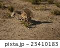 リス りす 栗鼠の写真 23410183