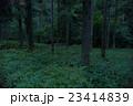 岐阜県郡上市和良のヒメボタル 23414839