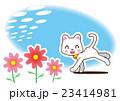 秋桜と白猫 23414981