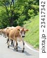 牛の行列 23417342