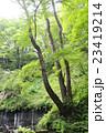 白糸の滝 23419214