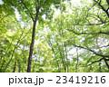 新緑 23419216
