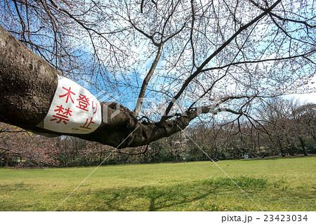 木登り禁止の貼り紙 23423034
