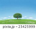 ポストカード、イラスト(昼寝) 23425999