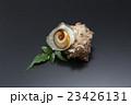 食材 貝 海鮮 サザエ 鮮魚 新鮮 食べ物   23426131