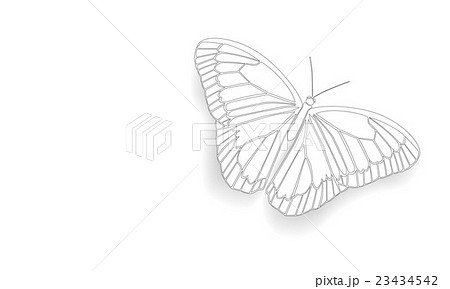 Butterfly with open wingsのイラスト素材 [23434542] - PIXTA