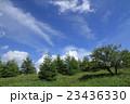 爽やかな夏の高原 23436330