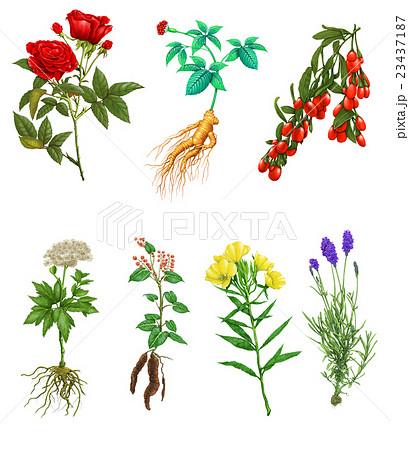 花 フラワー お花 23437187