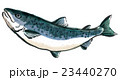 鮭 23440270