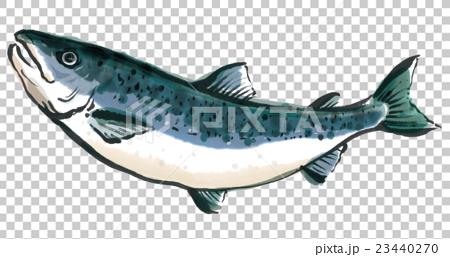 鲑鱼 23440270