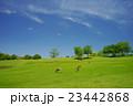 安らぎの奈良公園・飛火野 23442868