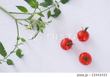 ミニトマトの写真素材 [23443435] - PIXTA
