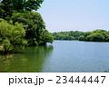 夏の雄蛇ヶ池 23444447