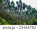 針葉樹林  23444782