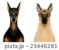 メガネをかけたドーベルマンとジャーマンシェパード 23446281