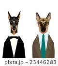 メガネをかけたタキシードを着たドーベルマンとスーツを着たジャーマンシェパード 23446283