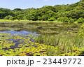 池 溜池 池底の写真 23449772