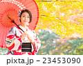 女性 着物 紅葉の写真 23453090