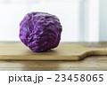 紫キャベツ 23458065