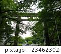 愛知縣護國神社の鳥居 23462302