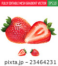 Strawberry on white background. Vector 23464231