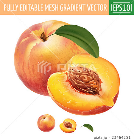 Peach on white background. Vector illustration 23464251