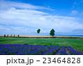 風景 北海道 美瑛の写真 23464828