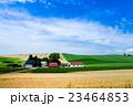 風景 美瑛の丘 畑の写真 23464853
